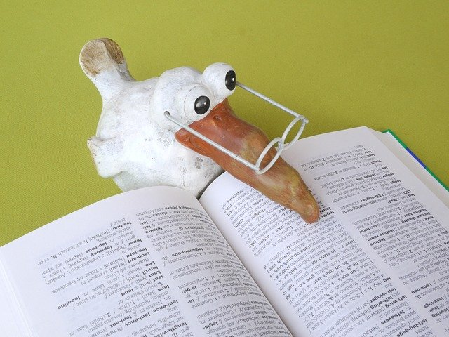 translating online. picture of a duck reading translation book